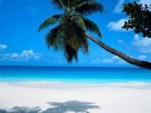 Palm tree-Beach - Flickr Anda