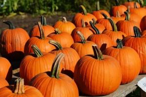 Fall Festival / Pumpkin Patch. Photo credit: Pixabay / Alexas Fotos